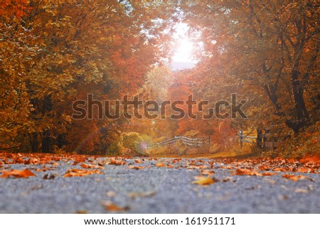 Autumn landscape with road and beautiful colored trees - stock photo