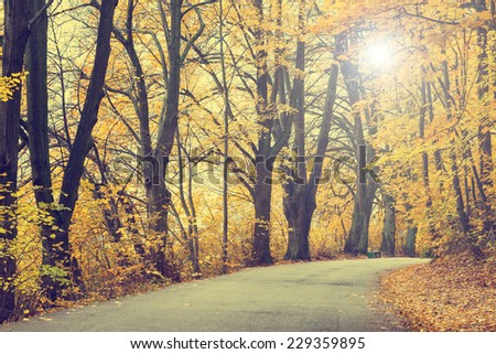 Autumn landscape with road and beautiful colored trees, vintage look - stock photo