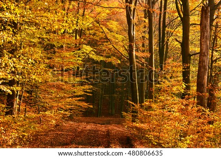 Autumn landscape with road in forest