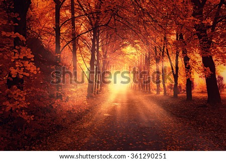 Autumn landscape with sun light between trees and red leaves on a park road - stock photo