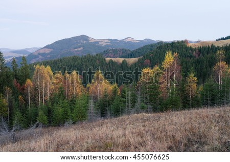 Autumn landscape with the forest. Cloudy day in the mountains. Dry grass on the meadow. Carpathians, Ukraine, Europe - stock photo