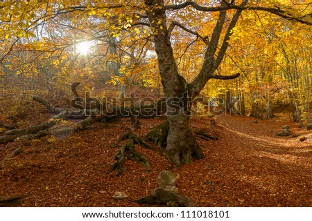 Autumn landscape with the sun and a big tree in the wood - stock photo