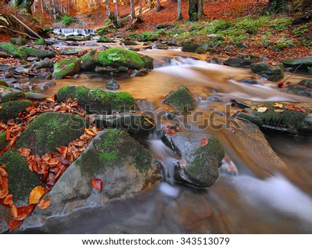 Autumn landscape with trees and river. Fallen leaves. Sunset time - stock photo