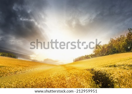 Autumn landscape with wheat field over stormy sunset sky, nature background