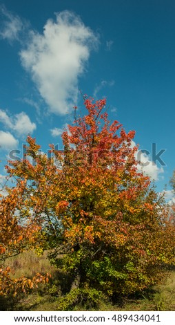 autumn landscape with wild pear tree, panorama