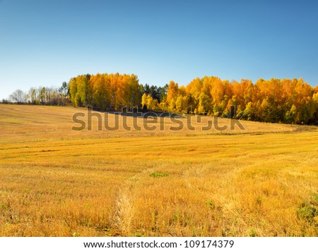 Autumn landscape. Yellow field and blue sky. - stock photo