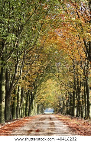 Autumn lane with bright orange leaves and trees - Drenthe, Netherlands - stock photo