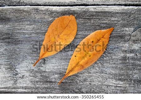 Autumn laurel leaves background - stock photo