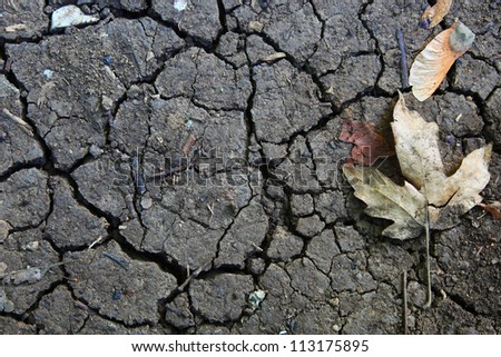 Autumn leaf and cracks in the ground - stock photo