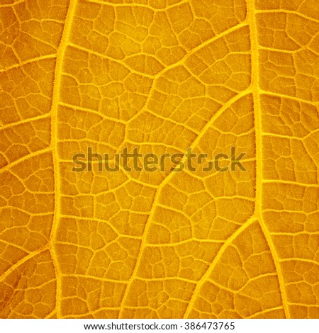 Autumn Leaf./ Autumn Leaf- Close Up - stock photo