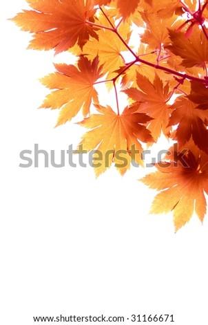 Autumn Leaf Background - stock photo
