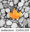 autumn leaf background sea stones black and white  photo - stock photo