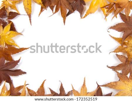 Autumn leaf border on a white background - stock photo