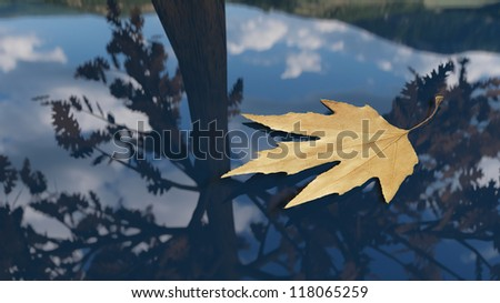Autumn leaf floating on the water - stock photo