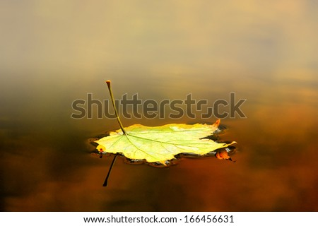 Autumn leaf floating on water with some mist and reflection - stock photo