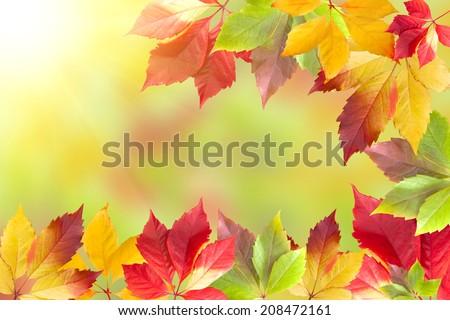 Autumn leaf frame on multicolour background   - stock photo