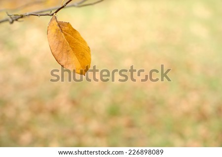 Autumn leaf in a park with copy space, shallow DOF. Natural autumn background. - stock photo