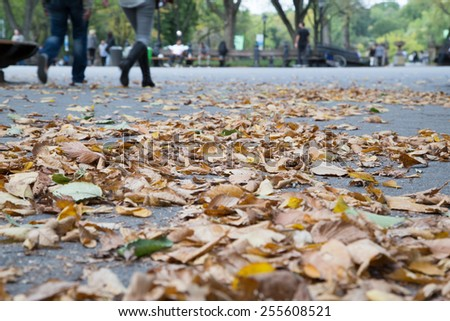 Autumn Leaf in Central Park - stock photo