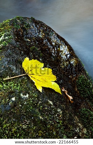 autumn leaf in the edge of the river - stock photo