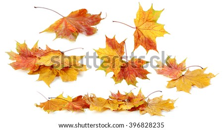 Autumn leaf isolated on a white, collage - stock photo