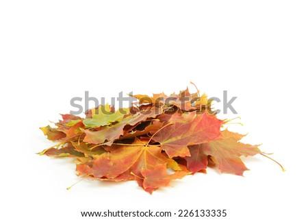 Autumn leaf isolated on white - stock photo