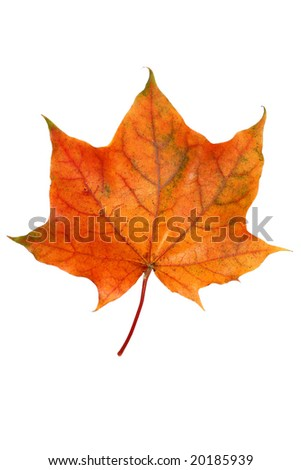 autumn leaf isolated (with clipping path)