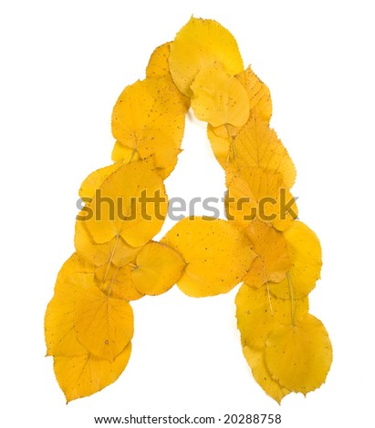 Autumn leaf letter A - stock photo