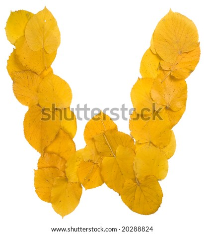 Autumn leaf letter W - stock photo