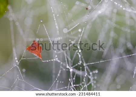 Autumn leaf on a wet spiderweb. - stock photo