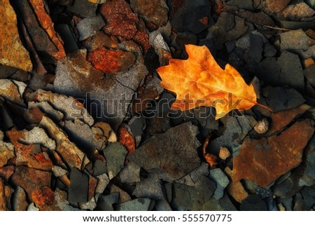 Autumn leaf on multiple layers of textured shale.
