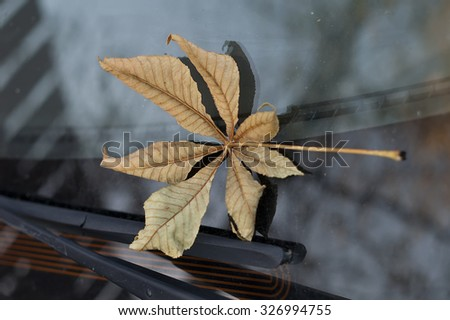 Autumn leaf on the car windshield, concept of season specific - stock photo