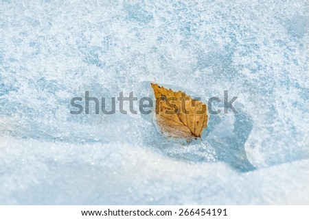Autumn leaf on the ice. Macro image with small depth of field - stock photo