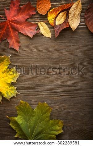 autumn leaf on wood black background - stock photo