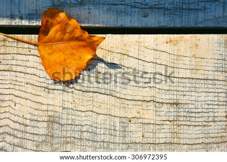 autumn leaf,one autumn leaf,autumn leaf fallen to the ground,park,painted wooden planks,object,dry autumn leaf - stock photo