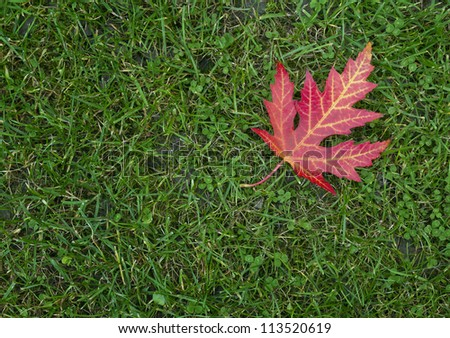 autumn leaf over green grass - stock photo