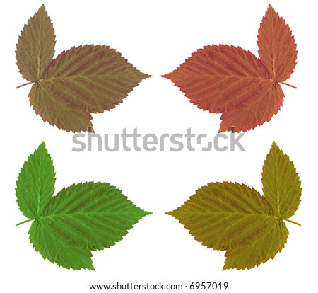 Autumn leaf over white background - stock photo