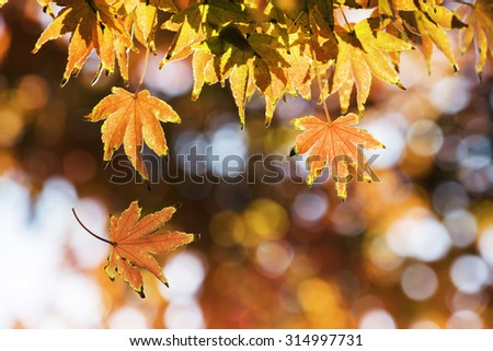 Autumn Leaf. Season Concept for Background Use