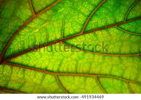 Autumn leaf texture, abstract background. Natural  pattern