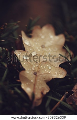 Autumn leaf with raindrops