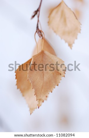 Autumn leaf - zen Delicate lighted brown - stock photo