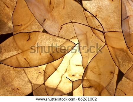 autumn leafs close up, autumn - stock photo