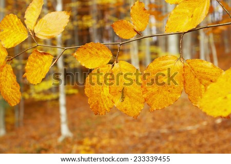 Autumn leafs in the forest  - stock photo