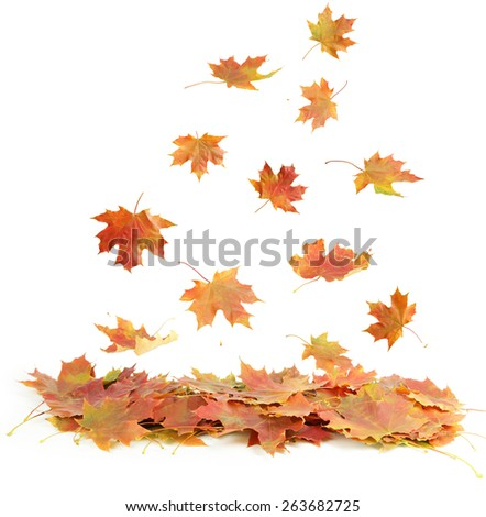 Autumn leafs isolated on white - stock photo