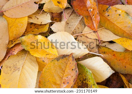 Autumn leafs on forest floor, covered in water droplets - stock photo