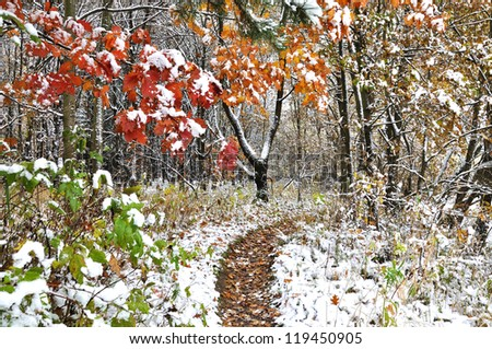 Autumn leafs under first snow - stock photo