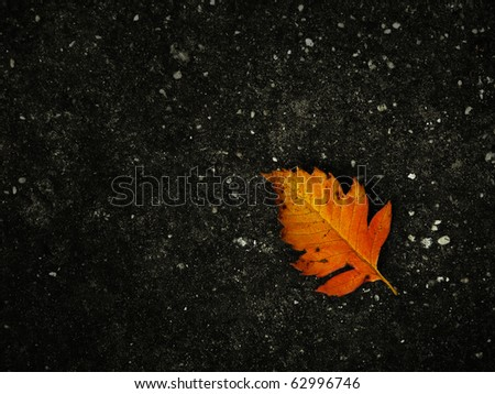 Autumn Leave on Concrete - stock photo