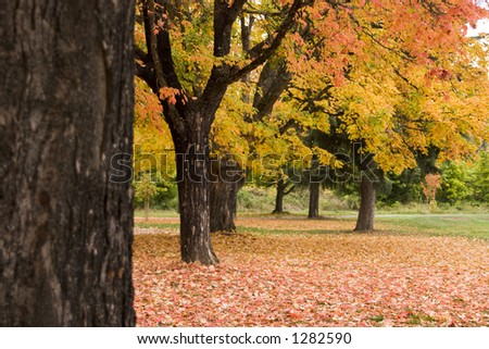 Autumn leaves 2 - stock photo