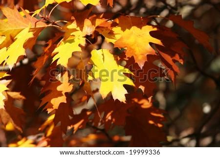 Autumn leaves, abstract autumn background - stock photo