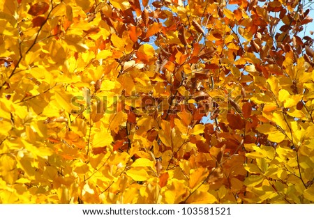 autumn leaves against a background of blue sky - stock photo