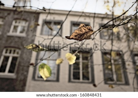 Autumn leaves against Dutch architecture - stock photo
